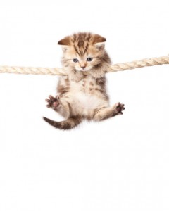 kitten hanging on the rope
