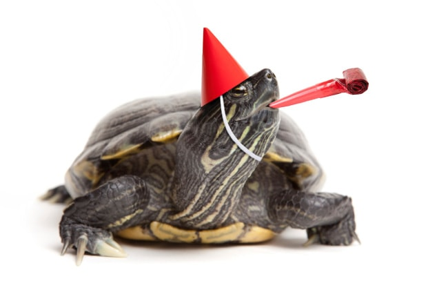 Turtle with red party hat and noisemaker