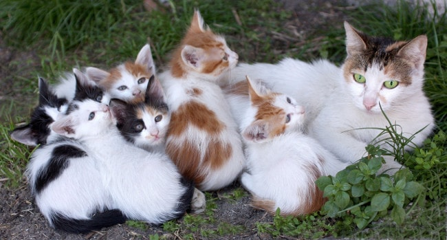 Cat family with lots of kittens