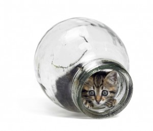 Even kittens want you to save for retirement.