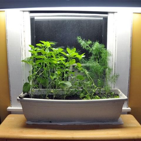 7 Tips for Starting Your Own Vegetable Garden