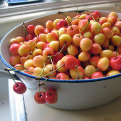 The cherries we picked from the neighbor's tree.