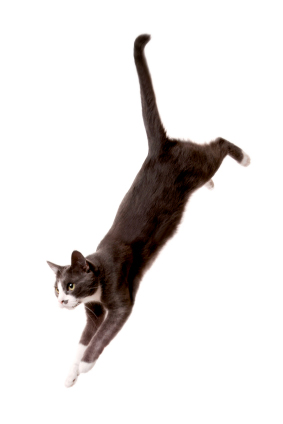Cats know all about re-balancing after a fall.