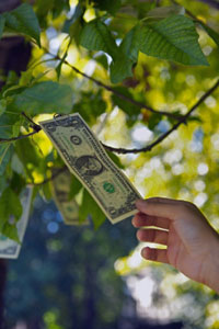If money grew on trees...