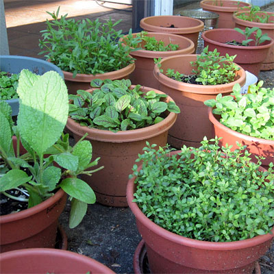 Container gardens can be a good way to start