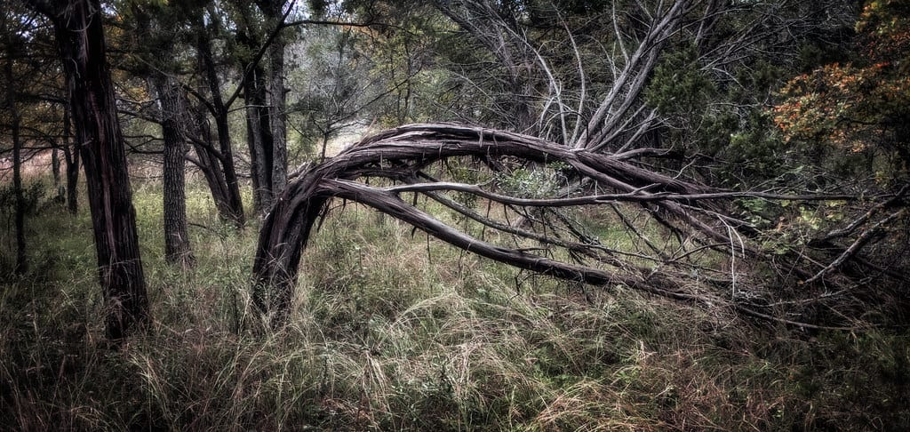 [Resilient tree]
