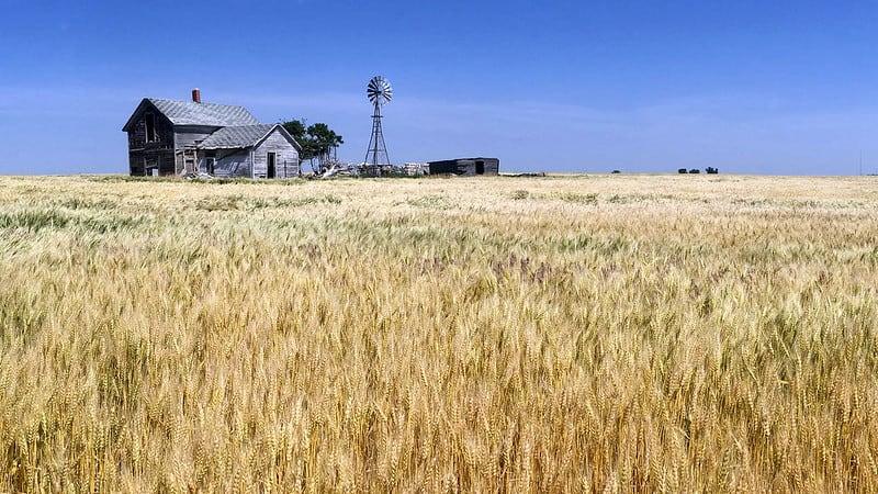 The wheat fields of Kansas