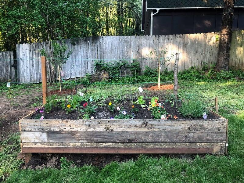 Square-Foot Gardening (Flowers)