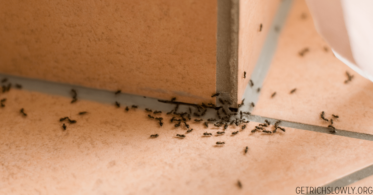 How to Get Rid of Ants (Without Calling an Exterminator