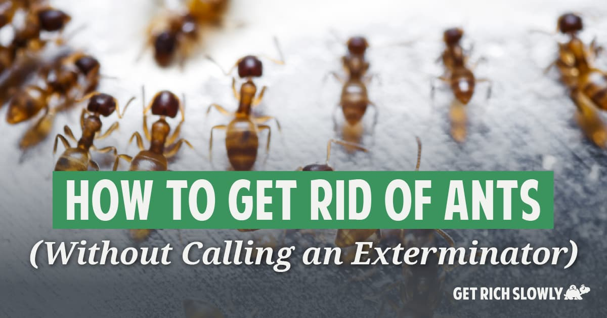 How to get rid of ants (Without calling an exterminator)